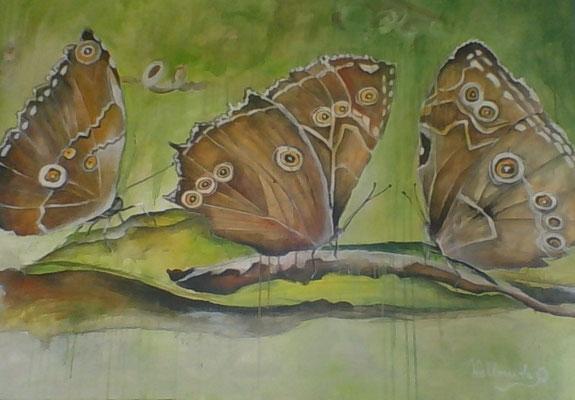 le 3 farfalle, 120x85