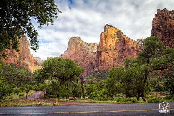 Zion Nationalpark II