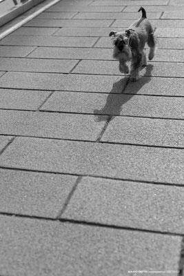 Schatten in Schwarzweiß