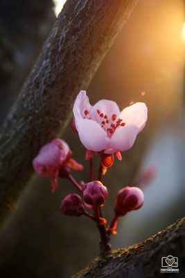 Blüte in der Abendsonne