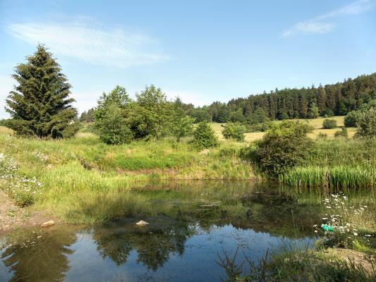 Der Biotop der Natur- und Umwelthilfe Goslar e. V. im Trüllketal. Foto: Regine Schulz