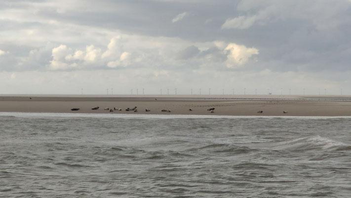im Hintergrund eine Seehundbank