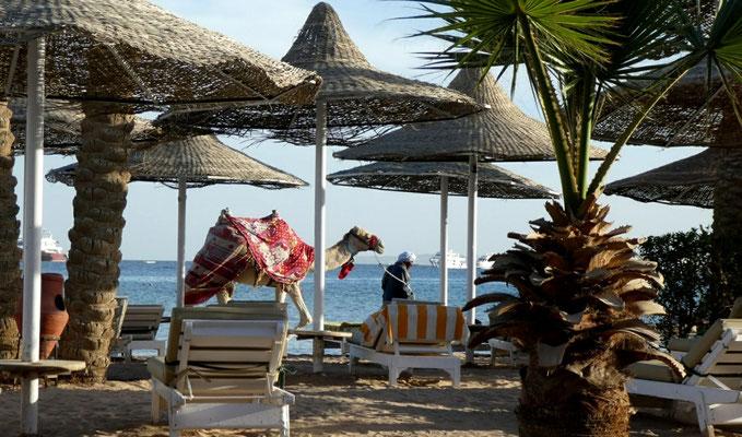 """Giftun Azur Resort"" - 2019 - am Strand"