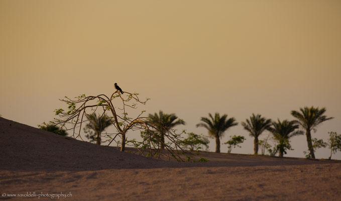 Der Wächter (Makadi Bay Egypt)