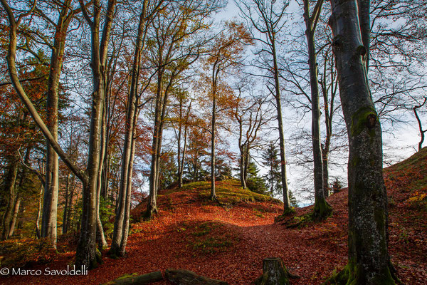 Herbstwald Belchen