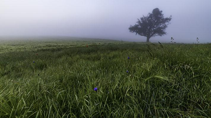 Nebel über den Feldern Dachsenhausen