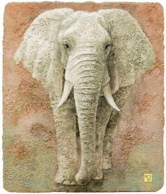 白象 F10号