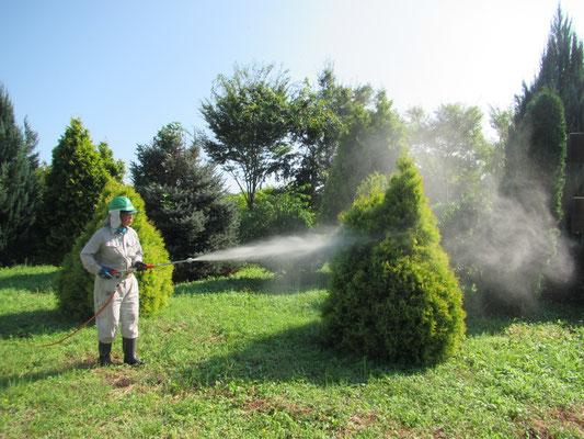 樹木の消毒