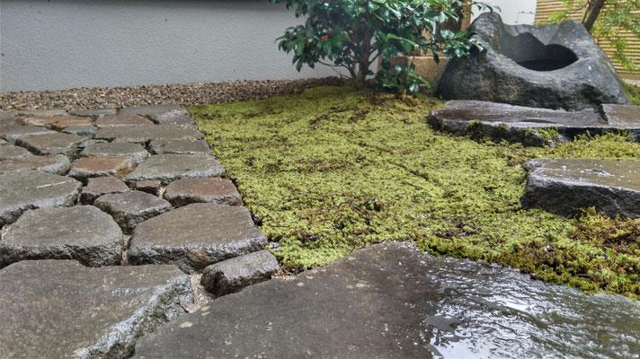 石と苔の風景