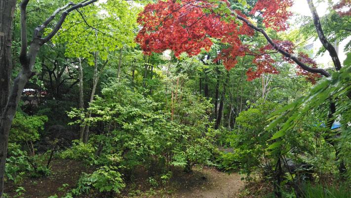 S様邸の森