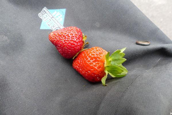 In Schlesien erinnerten mich die Erdbeerfelder am Straßenrand an die Tour vor 27 Jahren.