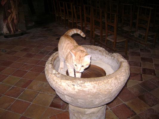 Molières le chat du bénitier