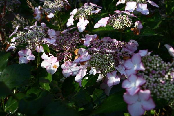 04.07...NR-Garten nach dem Regen