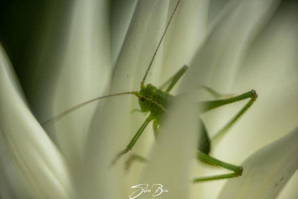 """02.07.""""Kaktus-Dahlien""""!"""
