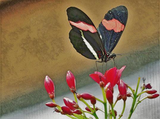 09.04...Schmetterling auf Blumen