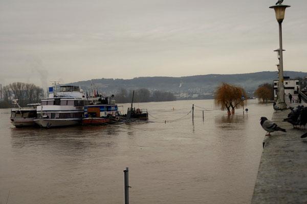 08.01...NR-Deichstadt