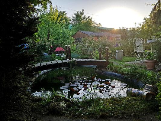 07.05....NR-Sonnenaufgang