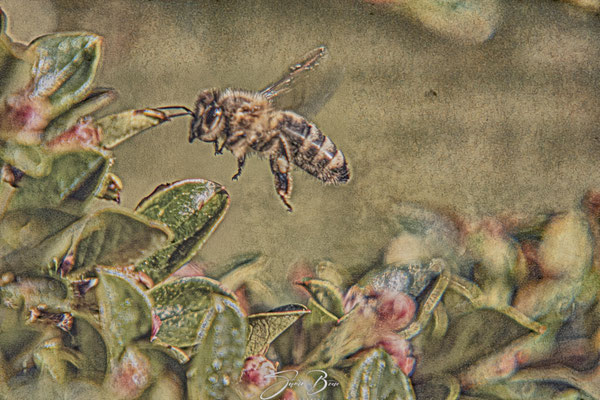 """13.05... """"busy bee""""!"""