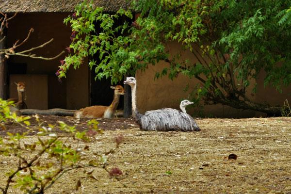 09.08...FfM...Zoo-Mittagsruhe