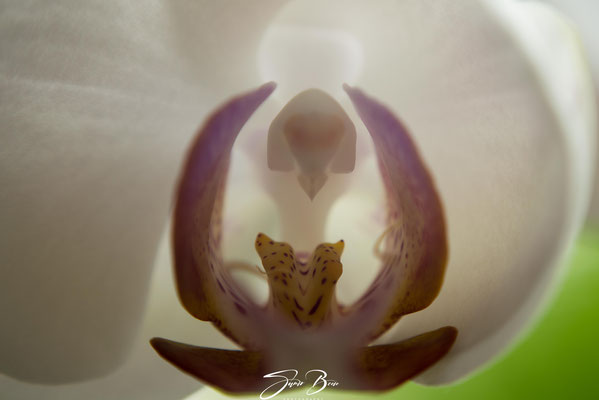 "16.08."" Orchidee am Sonntag ""!"