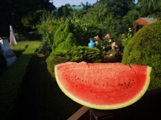 03.07...Wassermelone im Garten !