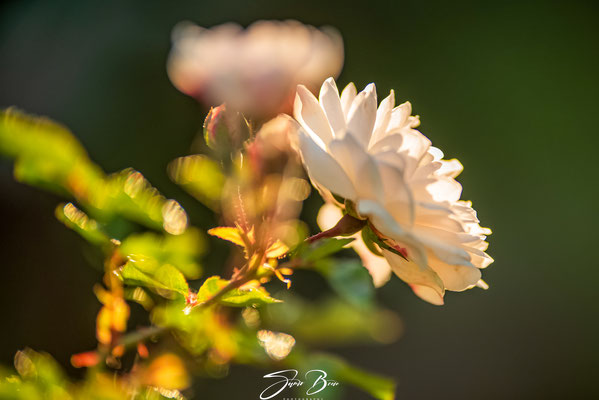 "23.07.""Sunset in the Garden""!"