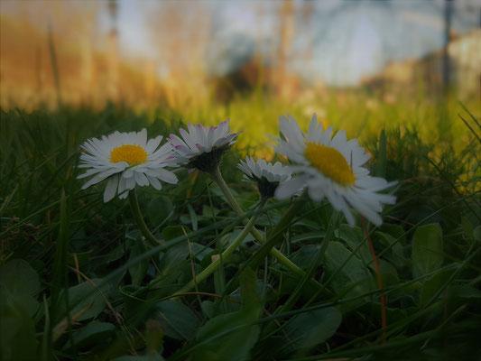 10.04...NR-Im Garten