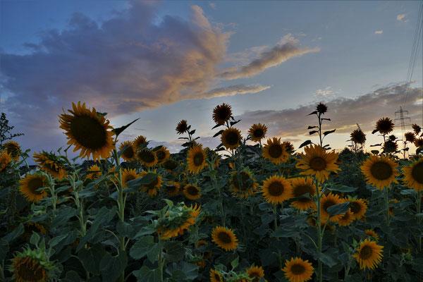 25.08...NR-Tornay Sunset
