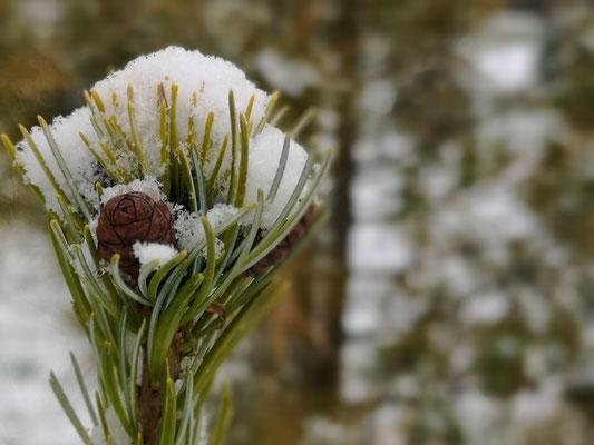 16.12...es hat frisch geschneit !