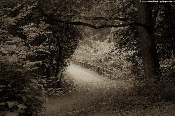 25.09....Herbst im Taunus