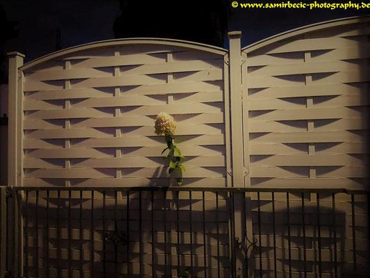 10.09.-Blumen & Zaun