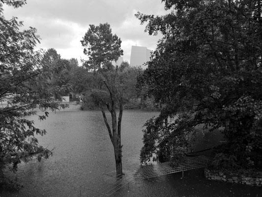 01.08...FfM..Regen in Zoo