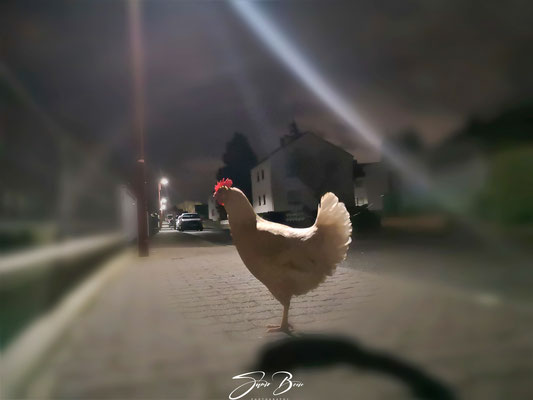 02.03...Night walk through the city !