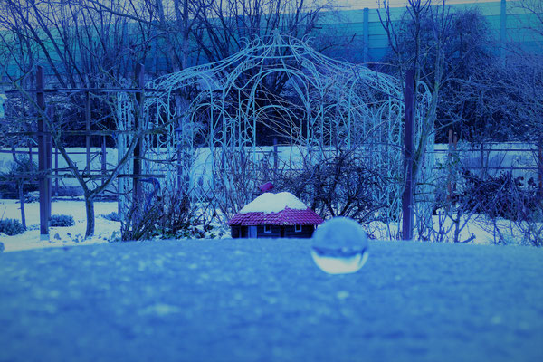 30.01...Januar im Garten