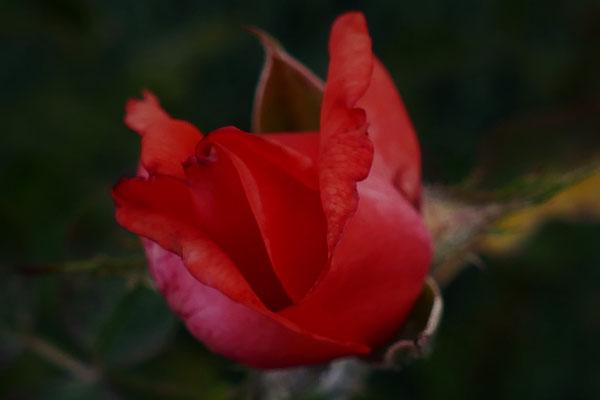 05.07...NR-Garten nach dem Regen