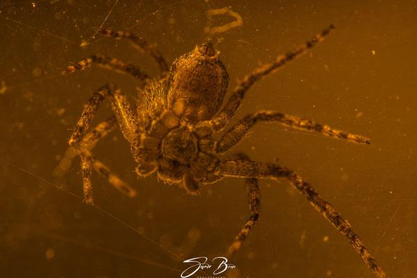 16.02...die erste echte Spinne 2020 !