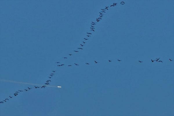 15.02...NR-Die Zugvögel kommen zurück !
