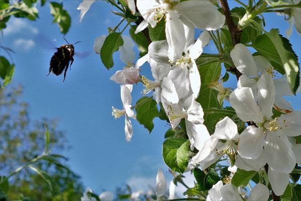 04.05...NR-Biene auf dem Vormarsch