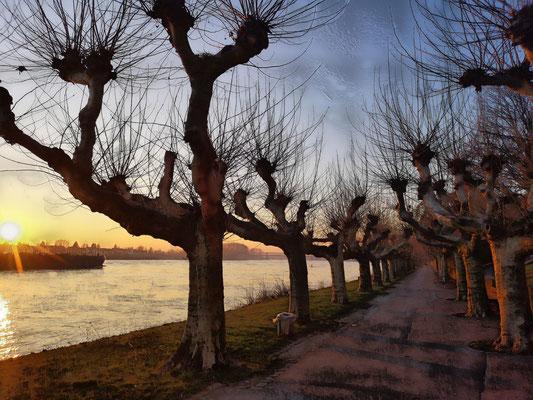 25.02...NR-Engerser Rheinpromenade