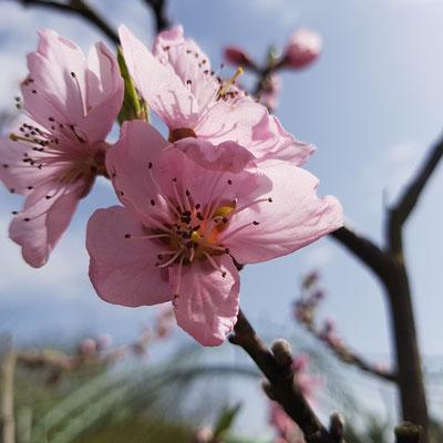 09.04...NR-Im Garten ist schon viel los