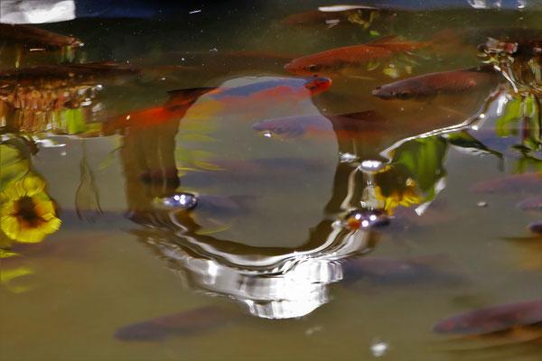25.04...NR-Wasserspiele in Gartenteich