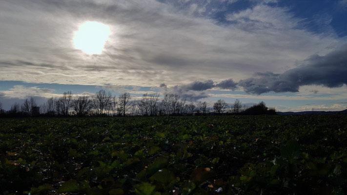 12.03...NR-Engerser Feld