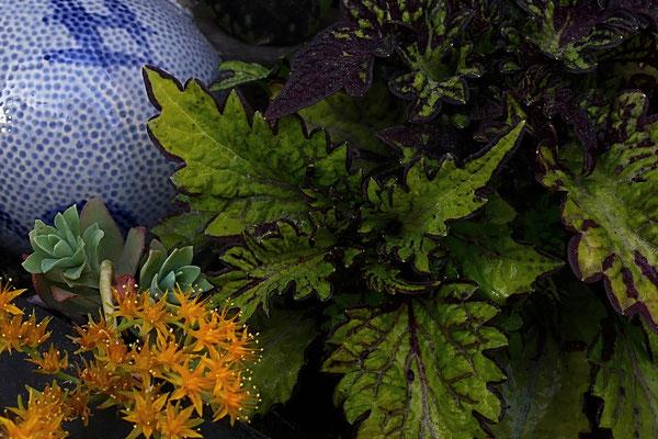 03.05...NR-Im Garten von meine Frau dekoriert