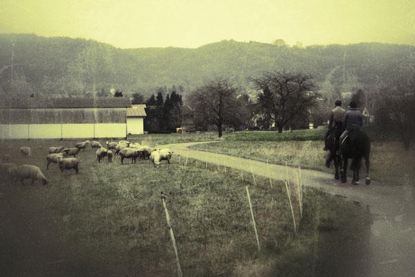 04.01...NR-Heimbacher Feld