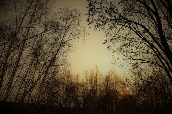 04.04...Sunset Distelfeld Neuwied