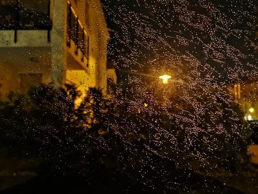 12.11...NR-November Rain