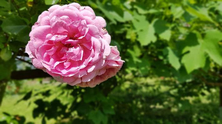 04.06....NR-Im Garten