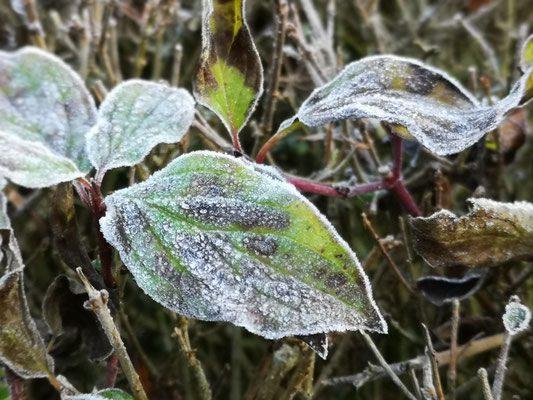 17.11..NR-Erster Frost