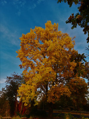 15.10...Goldene Oktober