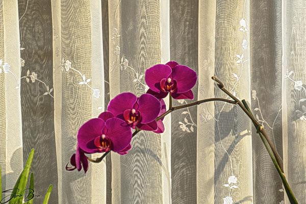 31.01...Orchidee von draußen gesehen !